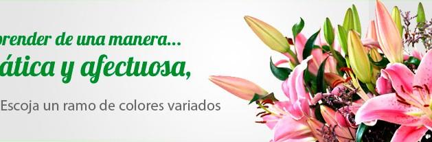 Envíar Flores a Domicilio Tenerife- El Draguito Garden Center