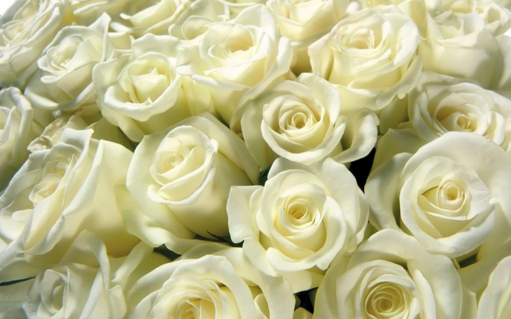 Ramo de Flores Blancas Alba | El Draguito Garden Center