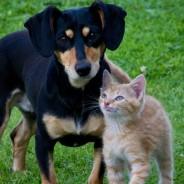 Las Mascotas Educadas son Bienvenidas – Welcome Pets