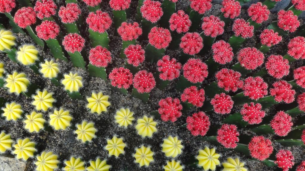 cactus-258047_1920