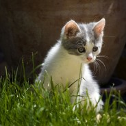 Porqué mi gato se come las Plantas?