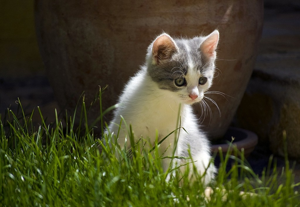 Poque mi gato se come las Plantas?