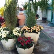 Navidad en El Draguito Garden Center.