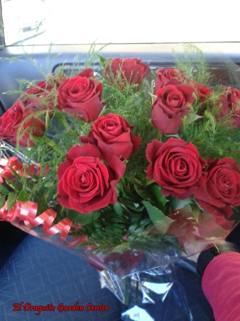 Doce (12) Rosas Rojas.