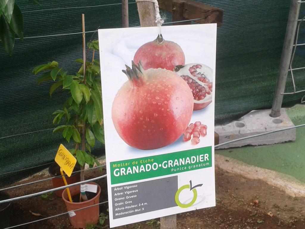 Árbol de Granado.