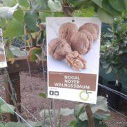 Que Frutales puedo Plantar en Canarias?