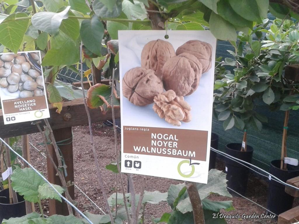 Árbol de Nogal.