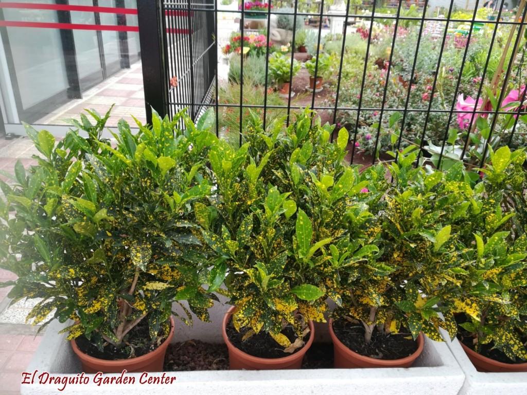 Plantas de exterior resistentes al calor interesting hm - Plantas de exterior resistentes al calor ...